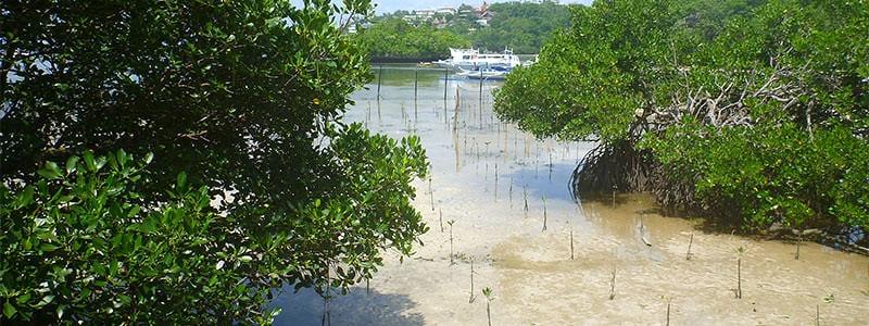 Lugutan Mangroves